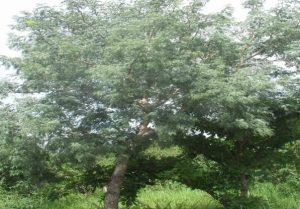 A la découverte de la forêt de Parakou une merveille naturelle…