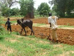 L'agriculture, une menace de la biodiversité au Bénin